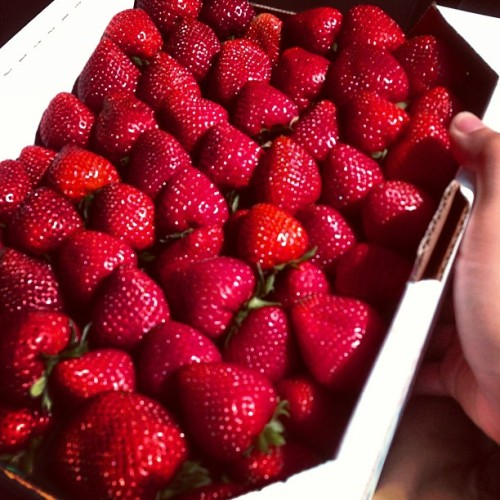Fresh picked Oxnard strawberries!