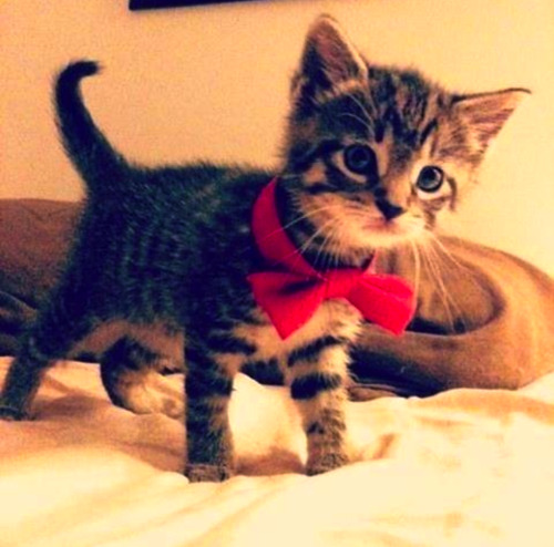 elegant-summer:  I'm a sir | via Tumblr on We Heart It. http://weheartit.com/entry/59238655/via/xsanxkus