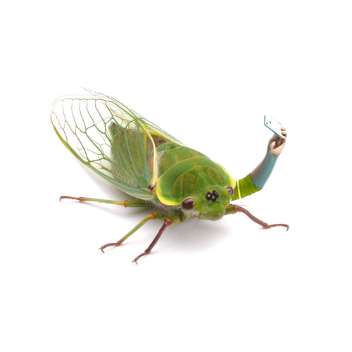 Above: The Cicada Millennial in its natural state.  Related: Billions of cicada millennials set to overrun East Coast, social media