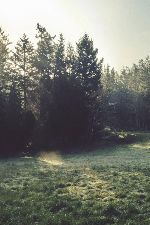 tearingdowndoors:  In the Morning Light | tyler forest hauser