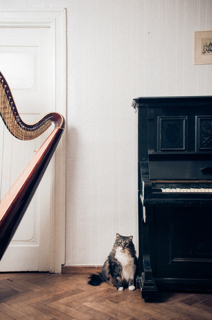 stored-snapshots:  The pianist (by Mait Jüriado)