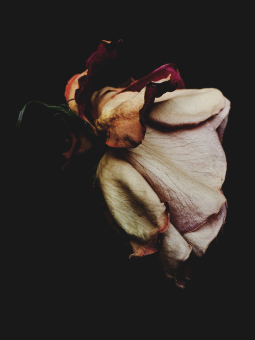 atavus:  Billy Kidd - Decaying Roses, 2012 Website | Tumblr