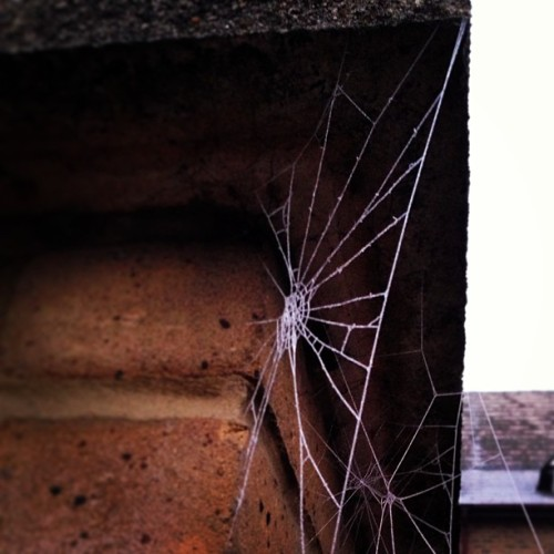 Frosty Cobwebs. #streetphoto #streetphotography #weather #winter #autumn #igers #igdaily #igersldn #ignation #igerslondon #instahub #instagrammers #hubnature #nature #fashiondaily #blogger #hipster #trendster #london #style #instafashion #londonstyle #londonfashion #indie #prepster #trend #fashiondiaries