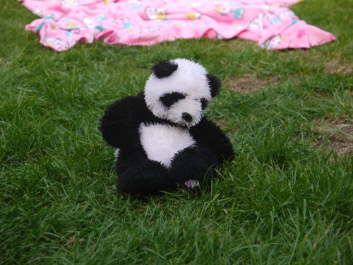 Teddy Bears's Picnic Correction. A panda's Picnic.View Post