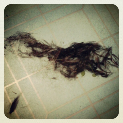 I cut my #dog's hair! proper grooming naman no! Haha #petcare