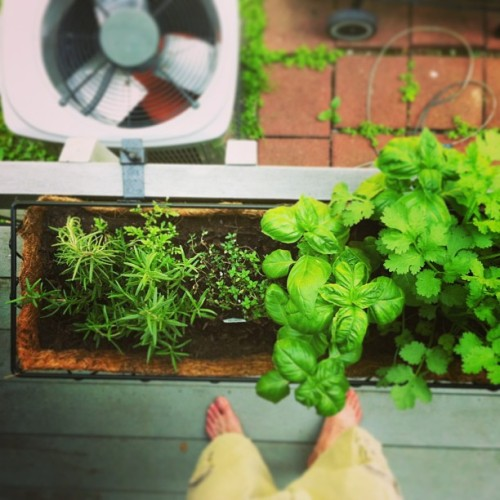 Mother's Day Herb Garden is doing well so far 👍