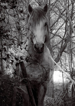 Horse.jpg by scott.legend on Flickr.