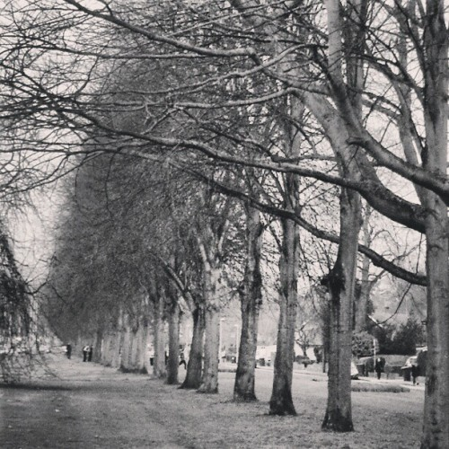 On may way… #blackandwhite #trees #perspective #half #grass #pathway #illusion