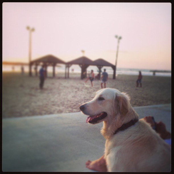 Sonnenhundergang #telaviv #Israel #sunset #beach #dog  (at Frishman Beach (חוף פרישמן))