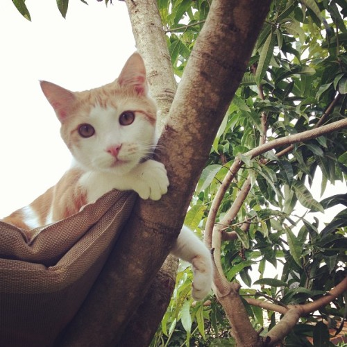 Charlie in his treehouse. #charlie #kitty #kitten #cat #catsofinstagram #instagood #cute #cutie #love #baby #boy #tree #nature #outdoors #explore #exploring