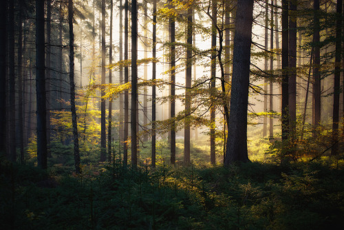 woodendreams:   (by Dennis_F)