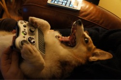 nippled:  yes I am doge yes I play video game