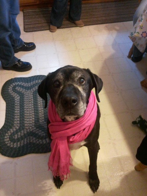 handsomedogs:  Our ten-year-old black lab/boxer mix, Bruce  Mako, why are you a dog?