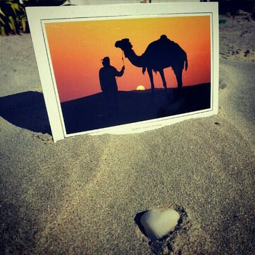 #postcard The #sunset & the #sunrise on the #Beach & on the #Desert in #UAE.  #Photo #pic #sunrise_sunsets_aroundworld #like #instapostcard #instaemirates #instadaily #الإمارات #iguae #igpostcard #wow #لطائفة #sun #sand #igers #photooftheday #camel #animal #Arab