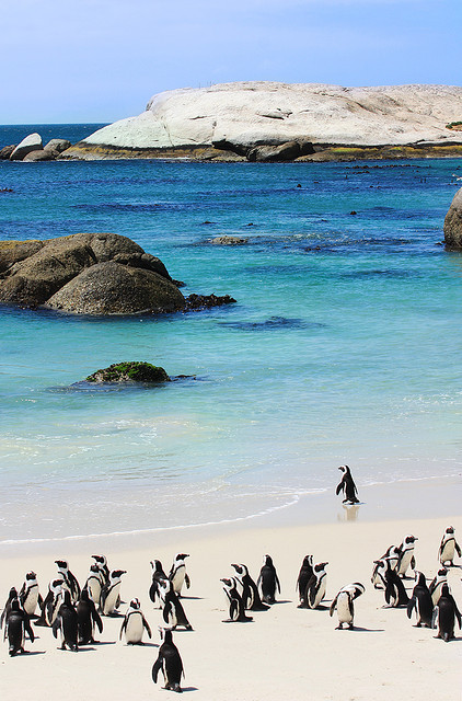 de-preciated:  Deep Blue | Cape Town by Gareth Weeks | www.garethweeks.com on Flickr.