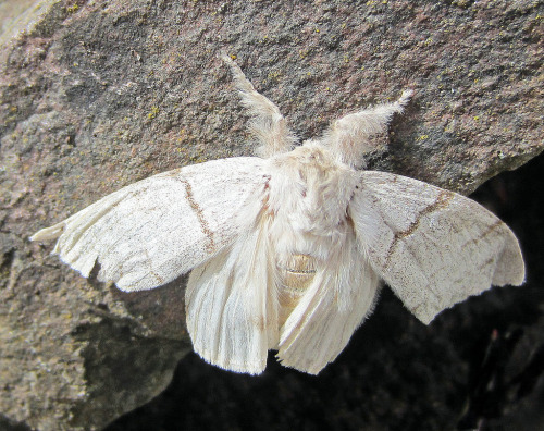 unicornae:  Moth (by Gracie230)