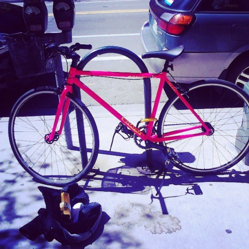 Her name is Lacey =D (at Denver Bicycle)