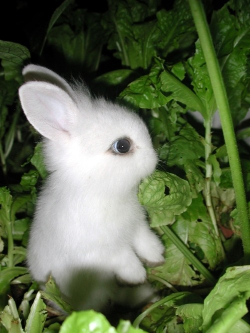 world's cutest bunny