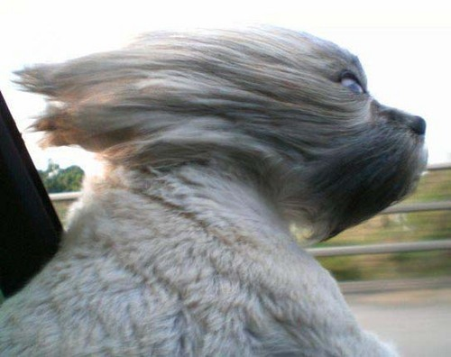 Windy Dog