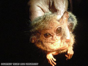 Scientists discover actual gremlins.