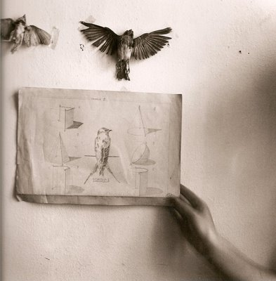 smut-to-go:  heartliketwigs:  (francesca woodman  via Windy Days)