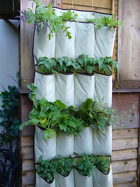 withoutmelissa:  I am madly in love with this tidy herb garden made from a shoe organizer - perfect for city dwellers like myself. Imagine growing all sorts of delicious herbs even on the smallest of urban balconies! Perfection. Learn how to make your own here.  brilliant.