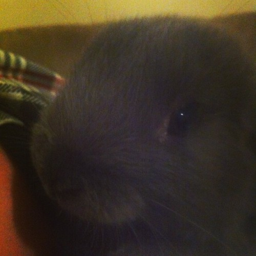 Ladies and Gentlemen, meet Benjamin Bunny. 🐇🐇🐇