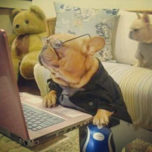..let me just check my emails #dog #glasses #old #lol