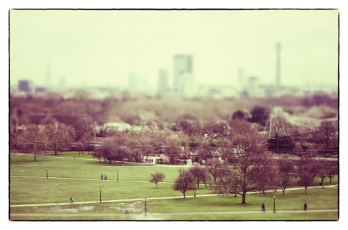 Primrose Hill, London #TiltShift #NikonD7000
