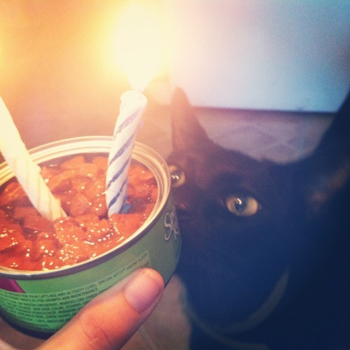 fuckyeahfelines:  It's Satan's birthday! :3