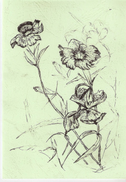 coffeepeople:  Love in Nature—flowers drawing-pen and ink by Naomi Chung's Daydream Art on Flickr.