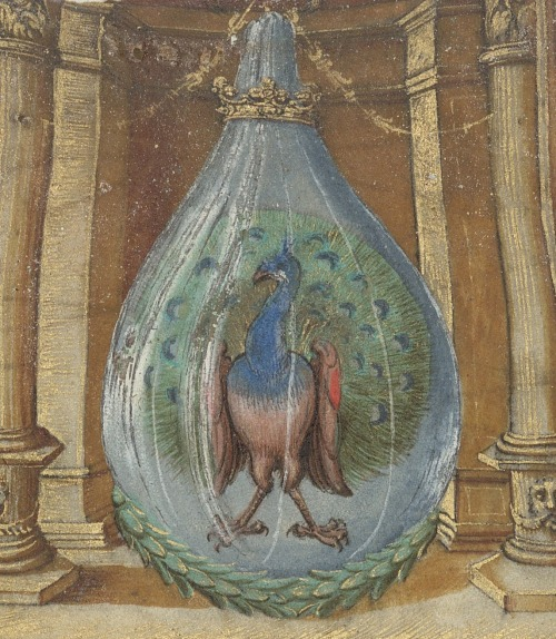 A peacock in a flask - from an edition of the Splendor Solis