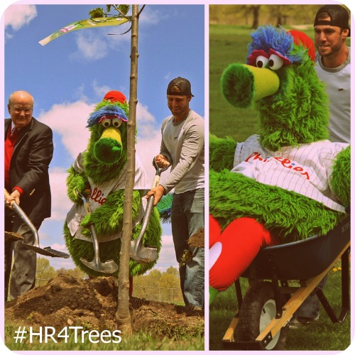 "Earth Day got some love from the Phillies, ARAMARK and Pennsylvania Horticultural Society, as they teamed up to announce their second season of ""Home Runs for Trees,"" a program aimed at helping to restore the region's tree coverage. Details » http://atmlb.com/ZF0dci"