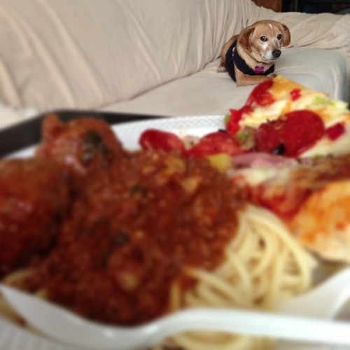 Sorry Charger, this food's only for humans. #foodporn #dog #awesome #tiltshift