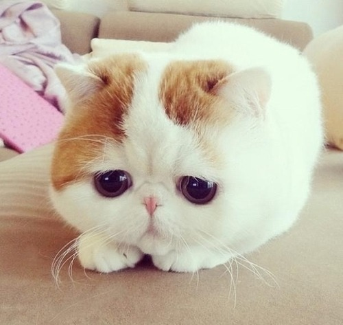 Kawaii of the Day 353 – Sad Kitty… http://bit.ly/Rz0jzL