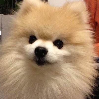 tommypom:  The amazing @tommypom