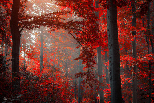 faeriesandravens:  Passion of Trees by ildikoneer on Flickr.