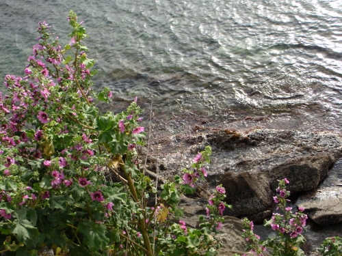 Flowers, rocks and sea in Cadaqués. Taken April 3, 2011.