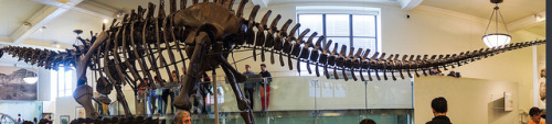 Panoramic dinosaur on Flickr.
