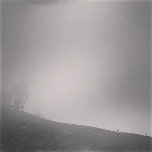 Horses in the fog. #Haiti (at Le Montcel)