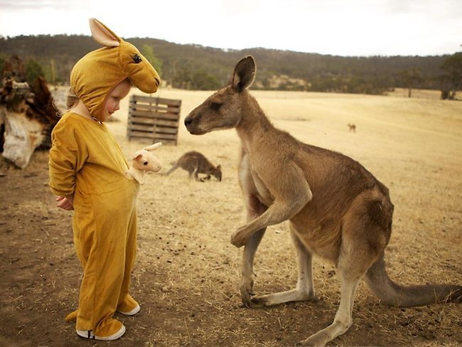queeniegalore:  Look, let's be honest. This is Australia. That kangaroo is probably about to kick that child in the face.