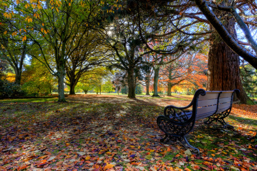 Autumn,Pollard Park Blenheim New Zealand.