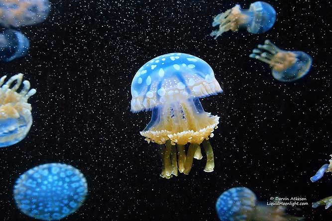 creepicrawlies:  Cosmic Jellyfish by Darvin Atkeson.