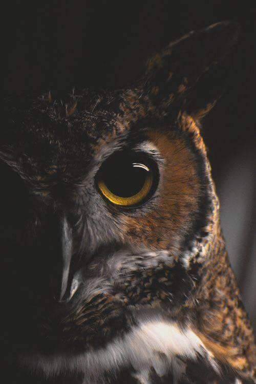 Owl Tumblr corujas owls | ...