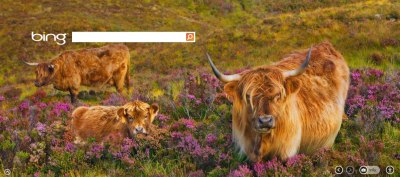 "How do you say ""cow"" in Gaelic? binged.it/105PZOh"