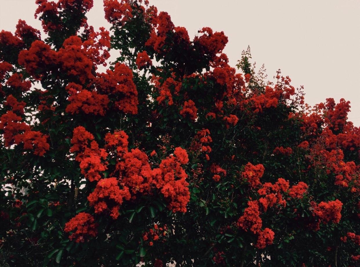 Pinterest Flowers: Aesthetic
