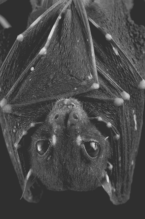 Bats are so beautiful.