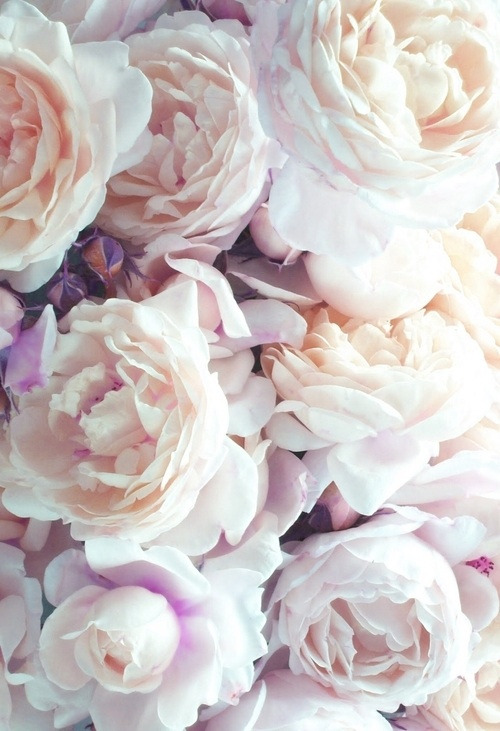 alcsi:  i've never failed to fail on We Heart It - http://weheartit.com/entry/51654481/via/Alcsi