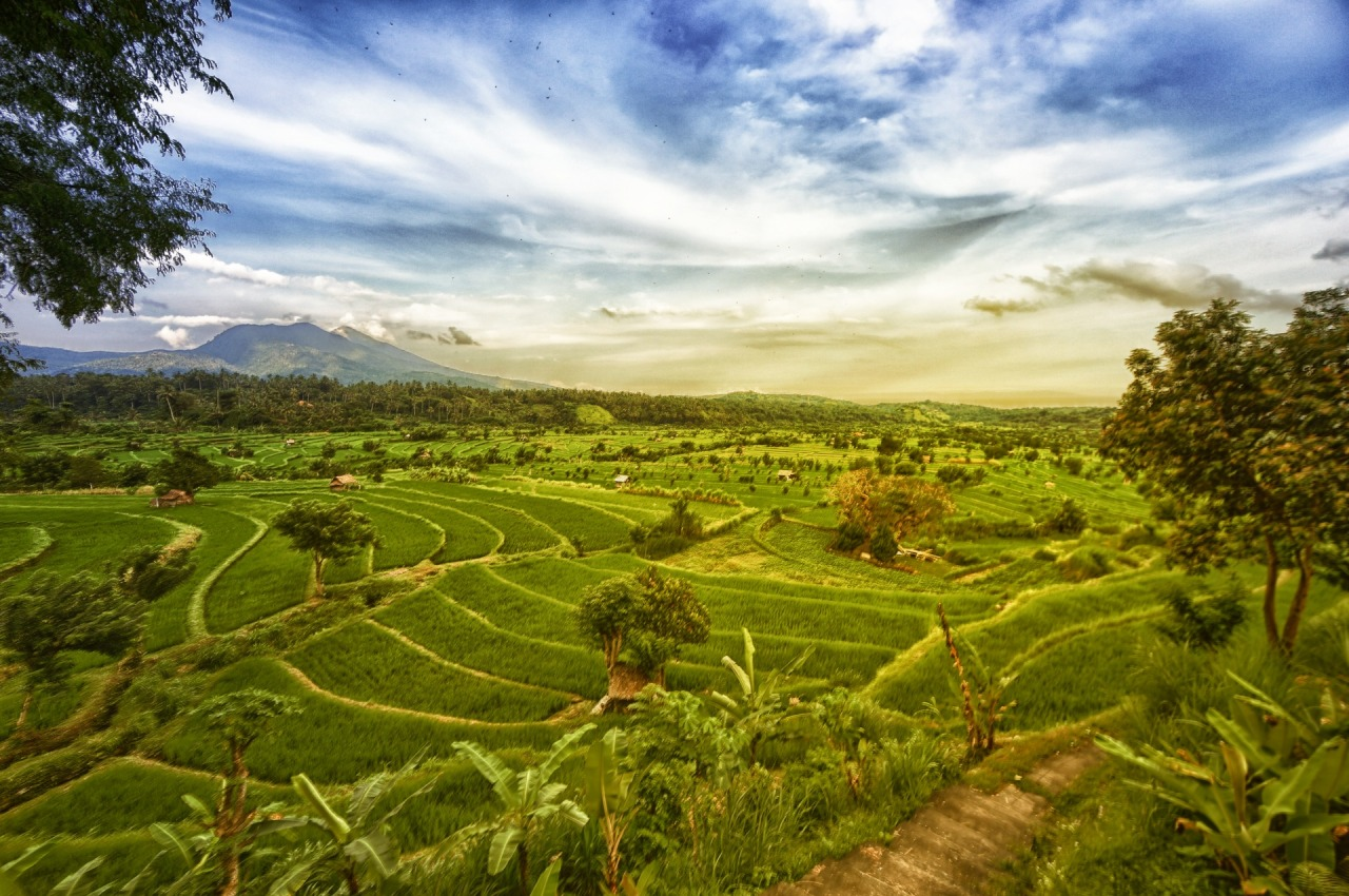 Ricefields on the east side of Bali