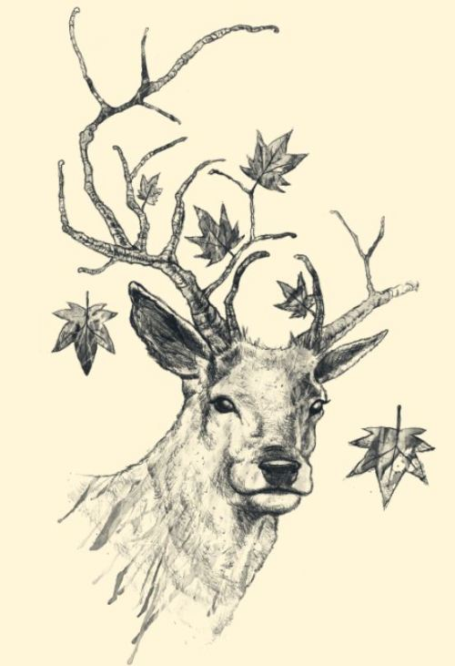 "Antlers are branches. tobefonseca:  I just posted ""From Fall to Rise"" Tobe Fonseca  (Brazil) via Curioos"